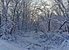 One Faint Light (Brandon Lee Dittsworth) Tags: trees light snow pennsylvania saltlick canonefs1022mm winter2010 canoneos1000d brandonleedittsworth