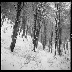 Winter II (elkarrde) Tags: yashicamat124g yashinon80mm135 80mm kodaktrix400400tx kodak trix 400 tx 400tx kodakxtol xtol blackandwhite blackwhite mediumformat tlr twinlensreflex film snow forest winter 2010 winter2010 square slope trees woods monochrome noiretblanc canoscan 8800f canoncanoscan8800f canoscan8800f vuescan mediumfilm