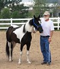 """Draft Horse Halter • <a style=""""font-size:0.8em;"""" href=""""http://www.flickr.com/photos/78989085@N02/7000714448/"""" target=""""_blank"""">View on Flickr</a>"""