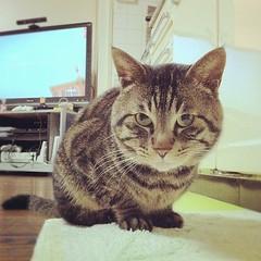 夜ムサシ。アイドルグラビア風。#mck #cat