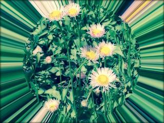 #CrazyCamera spring flowers