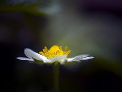 Delicada (_Zahira_) Tags: light flower macro luz lafotodelasemana flor olympus ngr e500 uro 35mmmacro ltytr1 olympus35mm