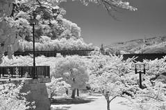 IR (idau yorahy) Tags: sky tree nature japan landscape nikon infrared natuire d5000