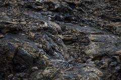 The Badlands (Preston Ashton) Tags: rock stone volcano bad badlands lands volcanic prestonashton
