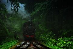 Lurking in the dark (DoctorMP) Tags: mountains rain clouds train para polska railway steam polen locomotive gauge narrow gry bieszczady dampflok gebirge deszcz wiosna kolej chmury parowz lena bkl schmalspurbahn wskotorwka parowozy wskotorowa kp4 dampfloks wsk kp43772