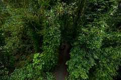 Pathway through antarctic beech forest, best of all lookout, Springbrook NP, QLD (ross_coupland) Tags: world park heritage clouds forest gold coast rainforest national valley queensland vegetation brook beech antarctic springbrook gondwana hinterland nothofagus purling numinbah