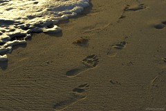 My two right feet.... (Joe Hengel) Tags: ocean california ca sea seascape beach walking seaside sand darkness outdoor walk footprints foam impressions orangecounty oc danapoint seashore theoc seafoam goldenstate capobeach capistranobeach beachocean