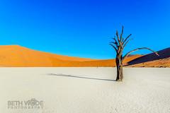 Parched! (Beth Wode Photography) Tags: africa tree sand beth dunes namibia sossusvlei saltpan deadvlei camelthorn wode reddunes bethwode