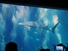 Georgia Aquarium (soniaadammurray - SLOWLY TRYING TO CATCH UP) Tags: blue atlanta fish water aquarium florida bokeh bubbles georgiaaquarium digitalphotography