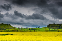 #Yellow and green (Eric Goncalves) Tags: uk light sky nature beautiful clouds landscape spring view horizon gloucestershire rapeseed nikond810 ericgoncalves nikon24120f14vr