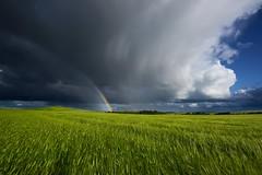 Te pintar un arco iris cada da............ (T.I.T.A.) Tags: arcoiris prado dueas arcodavella palencia nubes tormenta cebada