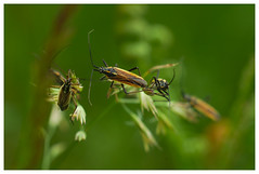 my camera is hitting the booze really hard... (e27182818284) Tags: insect schwarzwald blackforest smcpk55mmf18