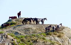 Go high (prairiegirrl) Tags: nationalpark northdakota wildhorses protected teddyroosevelt trnp may2016