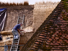 The thatcher (Englepip) Tags: man reeds dummer craft hampshire roofs tiles thatch worker thatcher craftsmanship skill