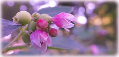 Destiny (babs van beieren) Tags: pink sony brugge romantic