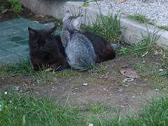 04062016N8 (starezubre) Tags: gatti giardino 2016 gattini mamme giocchi