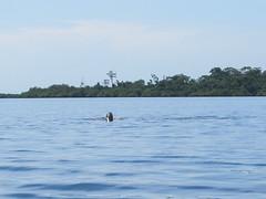 "Bahia de los Dolfines <a style=""margin-left:10px; font-size:0.8em;"" href=""http://www.flickr.com/photos/127723101@N04/27333297225/"" target=""_blank"">@flickr</a>"