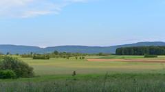 Die Felder von Bezgenriet - Strut mit Blick auf Kornberg (rechter Berg)  - Schwbische Alb DSC_8446_W_16_9_V1 (Roland707) Tags: schwbischealb gppingen badenwrtemberg nikond600 bezgenriet