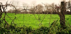 Fence (PaperBouquet of Mars) Tags: flowers green overgrown field fence post vine