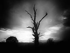 DEAD MAN STANDING (kenny barker) Tags: sunset bw tree nature monochrome landscape scotland olympus stealingshadows landscapeuk olympusep1 welcomeuk kennybarker