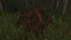 Oleander Bush (Moumix) Tags: oleander wiki wurmonline