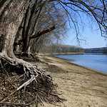 tree roots and river thumbnail