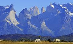 Foto 131. Torres del Paine (Francisco Negroni) Tags: chile patagonia paisaje torresdelpaine turismo cuernos paine