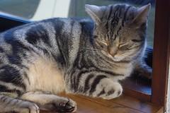 猫カフェの猫ちゃんその2の写真