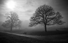 Bounding through the Fog (lemonshed) Tags: dog fog photoshop sigma 1020mm sthelens 2012 lightroom bounding merseyside 600d sherdleypark canon600d