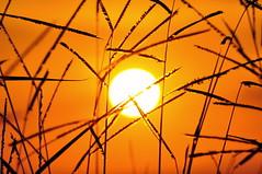 Pôr do sol 207