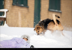 120205_7654 (John P Norton) Tags: anna dog snow f63 aperturepriority 50500mm canoneos1dmarkiii 1800sec copyright2012johnnorton focallength373mm