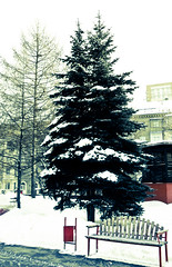 (Quick_Reality) Tags: trees winter bench photo place russia moscow
