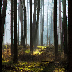Forest blue (Collin Key) Tags: trees light nature forrest deer idream naturepoetry spiritofphotography collinkey oracope ftsapril
