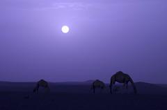 MOODY DESERT LANDSCAPE (SAUD ALRSHIAD) Tags: sky landscape photography nikon flickr moody desert saudi riyadh saud saudia     flickraward d7000  nikonflickraward azzulfi nikond7000 msawr saudalrshiad 7000 7000