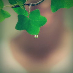 A Drop of Flood (Fld) Tags: water leaf upsidedown flood ivy drop refraction droplet 365 floodie