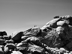 On the Rockx (goodbyetrouble) Tags: california park bw tree rock desert joshua national