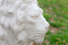 WHITE LION Close-Up