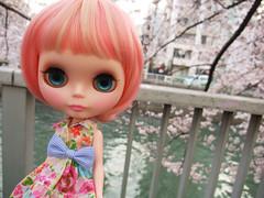 Cherry blossom petals swirl 5
