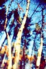 untitled (justinmullet) Tags: park autumn trees abstract fall minnesota evening leaf woods ray glare branches flare bemidji sunsport