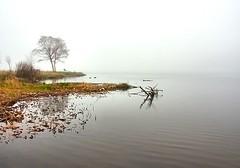 Morning Fog (Karen_Chappell) Tags: morning white lake tree water fog newfoundland stjohns calm nfld quidividilake