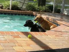 Dog Day Afternoon 027 (n.coryell) Tags: dogdayafternoon