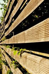 Lattenzaun (mheckerle) Tags: wood art nature pattern kunst structure holz oberursel 2016 strukturen