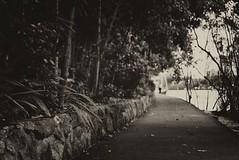 A Walk near The River's Edge (mrhethro) Tags: river pentax path walk brisbane walkway pathway