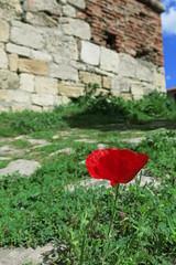 Vidin - Baba Vida Fortress (lyura183) Tags: bulgaria poppy fortress vidin    babavida