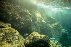 Early Morning Light (dwarfland) Tags: light fish water rocks under rays curaao 500px ifttt