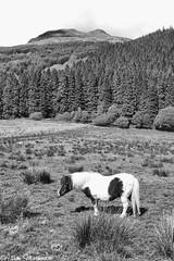 Arrochar Pony (AdamMatheson) Tags: uk blackandwhite bw mountain mountains monochrome canon mono scotland blackwhite scenery dam mountainbike scottish scene ixus national mountainbiking lomond compactcamera canonixus scottishlandscape argyllbute sloy scottishmountain ixus82is canonixus82is damloch parkloch adammatheson alpsarrochar adammathesonphotography landscapebritish landscapeeuropenational tarbetglen lomondarrochararrochar coriegrogainsloylochdamsloy loinglenallt