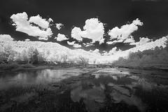 Toward the Canyon (DRCPhoto) Tags: canon ir westvirginia 5d cheatriver digitalinfrared irconverteddslr