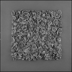 square -hazel nuts shell- 95 (sirolajos) Tags: bw film analog zeiss square lights blackwhite noiretblanc details shades hasselblad analogue ilforddelta400 closer planar 500cm selfdevelopment epsonperfection4990photo pyrocat11100 sekonic l308b