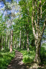 178 - tranquility (md93) Tags: trees green path walk lush tranquil troon ayrshire fullartonwoods 366