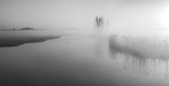 White (Jorden Esser) Tags: morning mist tree reed water monochrome fog landscape goodmorning waterscape nederlandvandaag monochromemonday